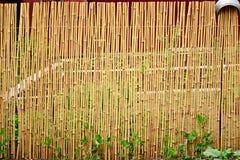 Gult bambustaket Royaltyfri Foto