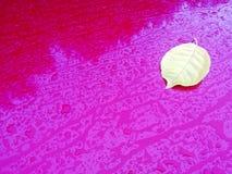 Gult blad för våt aska efter regnet på bilhuvbakgrunden med droppar, kopieringsutrymme isolerad white f?r h?st begrepp royaltyfria bilder