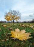 Gult blad i förgrunden och trädet Arkivfoton