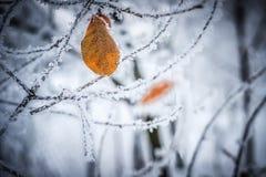 Gult blad i vintern, guling, blad på en filial, vinterträd, snön på filialen royaltyfria bilder