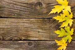 Gult blad på gammal träbakgrund Arkivbild
