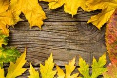 Gult blad på gammal träbakgrundsram från höstsidor Royaltyfria Bilder