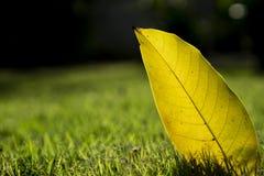 Gult blad på mörkt - grön bakgrund royaltyfri bild