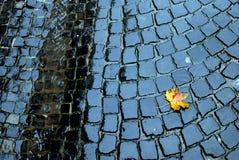 Gult blad på trottoaren Arkivbilder
