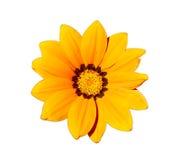 Gult blommahuvud Royaltyfri Fotografi