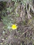 gult blommaogr?s arkivfoto