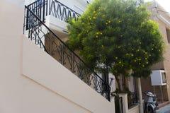 Gult blommaträd och gammalt grekiskt hus i den Kos ön Grekland Arkivbild