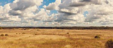 Gult fält Arkivbild