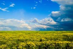 Gult fält med den blåa himlen Arkivbild