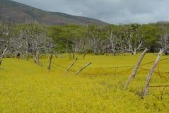 Gult fält och staket på Molokai arkivbild