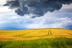 Gult fält på dramatisk himmel Arkivfoton