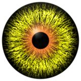 Gult främmande öga med den orange cirkeln runt om eleven Royaltyfri Illustrationer