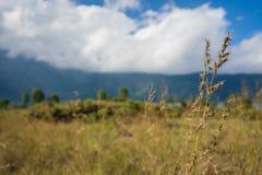 Gult gräs Arkivfoton