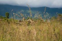 Gult gräs Royaltyfri Fotografi