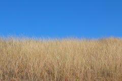 Gult gräs och blå himmel som ukrainsk flagga royaltyfria bilder