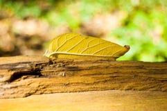 Gult höstligt blad Arkivfoto