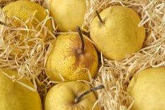 Gult päron Duchesse i torrt sugrör Royaltyfri Fotografi