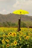 Gult paraply på härliga landskapsolrosor i trädgård med Arkivbild