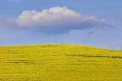 Gult rapsfröfält och moln på den blåa himlen royaltyfri foto