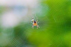 Gult svart Orb-vävare spindelAraneid kryp som sitter på hans spiderweb på grön suddig bakgrund royaltyfri foto