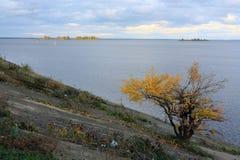 Gult träd i Cherkassy Royaltyfri Fotografi