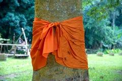 Gult tyg runt om en trädstam för skyddet av träd i Thailand Royaltyfria Foton