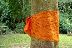 Gult tyg runt om en trädstam för skyddet av träd i Thailand Royaltyfria Bilder