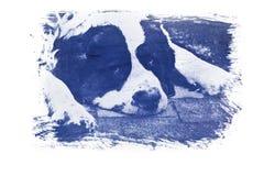 Gum bichromate print Stock Images