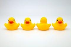 Gum ducks Stock Photos