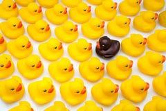 Gum ducks yellow Royalty Free Stock Photo