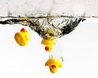 Gum kaczki Zdjęcie Stock
