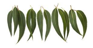 Gum Leaf Border Stock Images