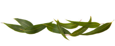Gum Leaves Border royalty free stock images