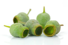 Gum Nuts. Eucalyptus gum nuts isolated against a white background royalty free stock photo