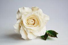 Gum paste rose Royalty Free Stock Image