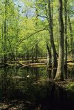 Gum Swamp. Spring, Cades Cove, Great Smoky Mtns NP, TN stock photo
