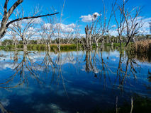 Gum Swamp. At Forbes showing dead trees, clouds and sky, Forbes, Australia Royalty Free Stock Photography