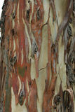 Gum tree bark Stock Photos