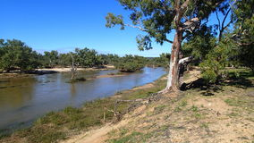 Gum Tree on River Edge. Australian Gum tree sits on the banks of the Murchison River Stock Photo