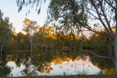 Gum trees and a dam. The last light grightens the tops of the gum trees reflectd in calm water Stock Photos