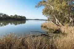 Gum Trees Murray River Australia Stock Image