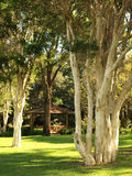 Gum-trees in the park. Gum-trees and a summer-house in Wollongong Botanic Garden, NSW, Australia Stock Photography
