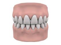 guma zęby Obrazy Stock