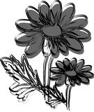 Gumamela flower. Vector illustration of a flower Royalty Free Stock Images