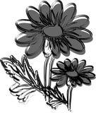 Gumamela flower. Vector illustration of a flower stock illustration