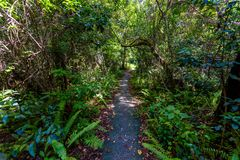 Gumbo Limbo Trail of the Everglades National Park. Boardwalks in the swamp. Florida, USA stock images