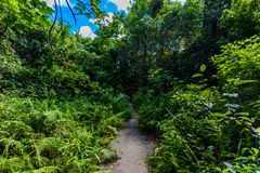 Gumbo Limbo Trail of the Everglades National Park. Boardwalks in the swamp. Florida, USA royalty free stock photos