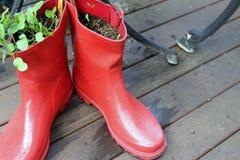 Gumboots在庭院里 库存照片