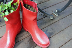 Gumboots no jardim fotos de stock