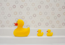 gumkę trzy kaczki Obraz Royalty Free